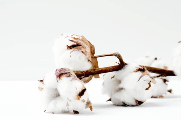 El algodón orgánico es un material usado en moda sostenible.